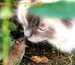 现实版《猫和老鼠》