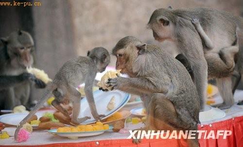 """泰国""""猴子赴宴"""" 享受蔬果饕餮大餐(组图)"""