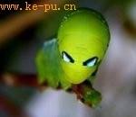 酷似外星生物的昆虫