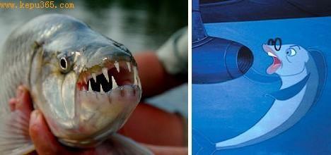 大部分人都不知道巨大虎鱼,因为它只生活在非洲刚果相对与世隔绝的河系里。