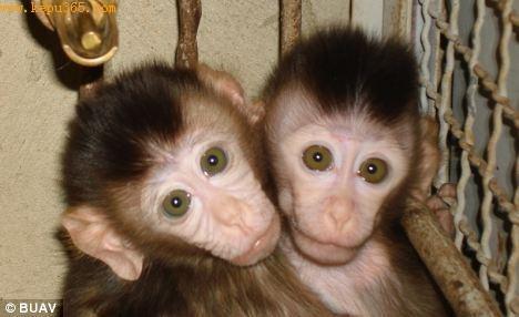 世界各地的圈养猴子生育的小猴子,将会用船送往 ...