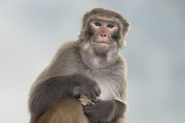 科学家通过研究能读懂猴子的心思,并能预测它们下一步的活动。