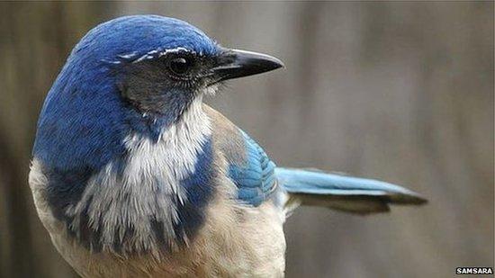 鸟类为同类办葬礼 停止觅食并发出危险警示