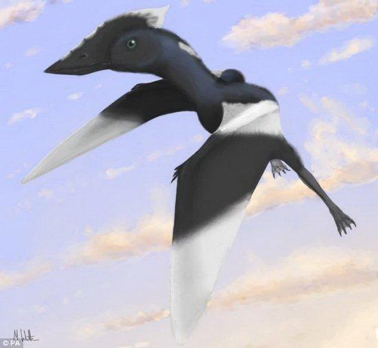 英5岁女童发现翼龙新物种 并以她的名字命名