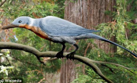 反鸟亚纲类史前鸟类,有锯状的喙和爪形翅膀,与恐龙一起灭绝了