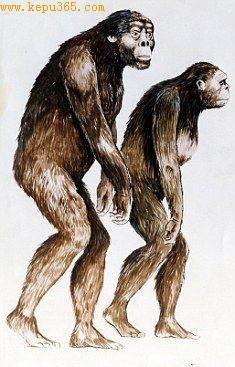 这些足印据信是非洲南方古猿留下的,他们是早期原始人类.
