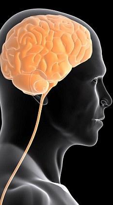 研究证明人脑和猴脑的相似度超出此前预计,我们必须重新审视人类和猴子语言的起源