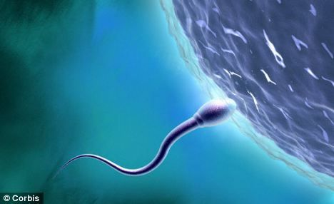 这项西班牙研究表明,即使在年轻男人身上,精子浓度也以平均每年2%的比例下降。