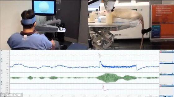 在第一项此类试验中,研究人员已经能够借助一个人控制正在摆动的老鼠的尾巴,而且不用进行有创移植手术