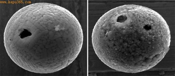 在日本Ajiro岛发现的富含铁的微陨石