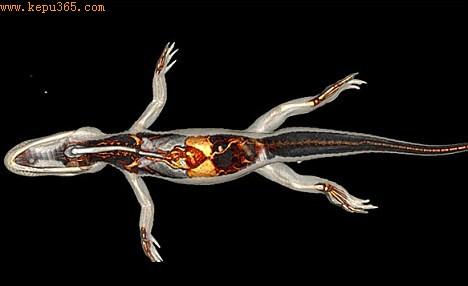 """作为一个名为""""Locomorph""""的欧洲项目的一部分,研究人员还制作了其他几种动物的同样引人注目的照片"""