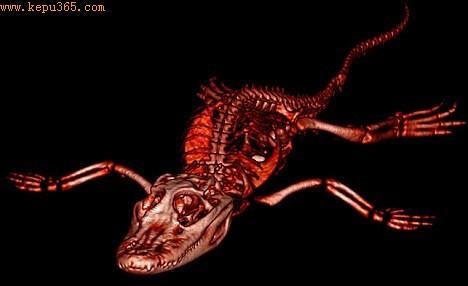 这些照片清晰地展现了动物骨骼变化