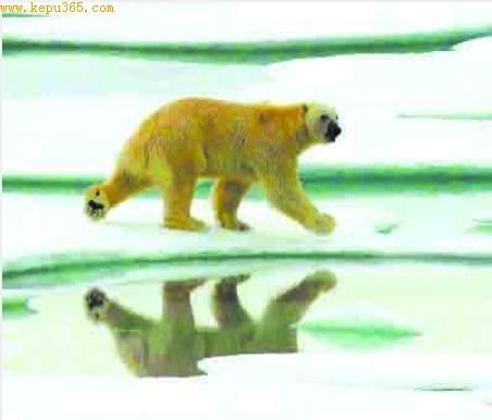 科技时代_中国科考队北极仅遇一只北极熊
