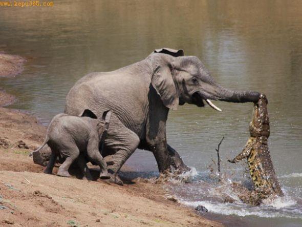 非洲伏兵(图片来源:Martin Nyfeler)