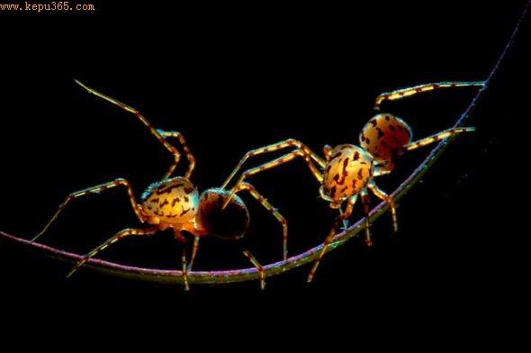 """""""走钢丝""""的蜘蛛"""