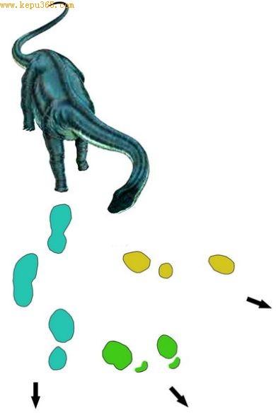 """昌都""""大脚印""""化石点恐龙足迹示意图"""