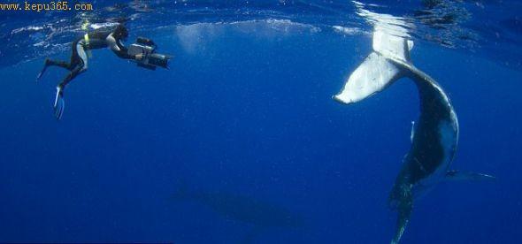 这头幼鲸故意撞上35岁的潜水员芒斯,眼里流露出顽皮。