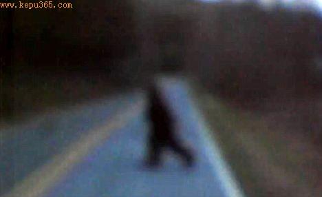 视频截图,所展现的动物据信就是传说中的大脚怪。