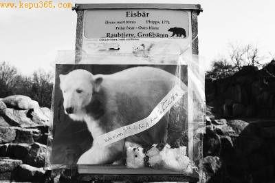 """3月20日,民众在柏林动物园的北极熊""""克努特""""生前饲养池前献花悼念"""