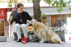 杨先生经常训练爱犬加减乘除 重庆晚报记者 杨帆 摄