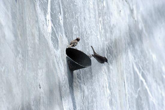 燕屋外墙上的燕洞,燕子由此出入